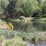 Trout fishing in Buckinghamshire 0900